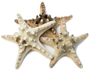 Spikey Starfish